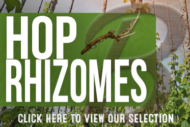 Exclusive distributor for Ss BrewTech